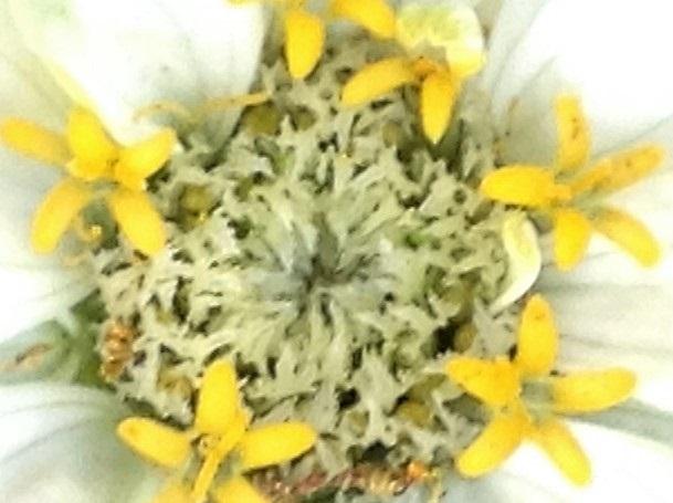 rodekkwiatka.jpg