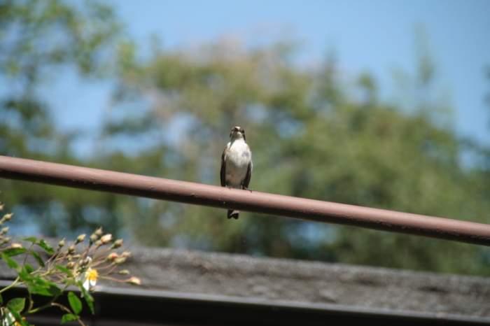 ptak1.jpg