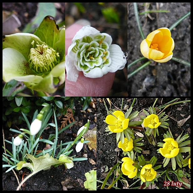 wiosna2015.jpg