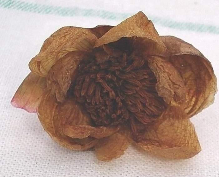 kwiat-1a.jpg