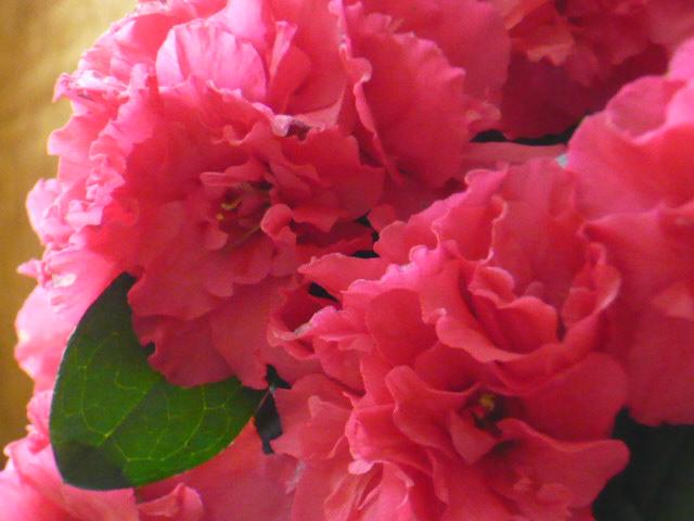 kwiatyazaliiczerw.JPG