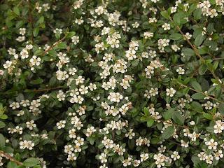 irga_kwiat640x480.jpg