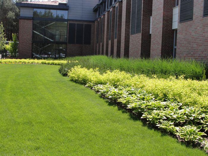 trawy1.jpg