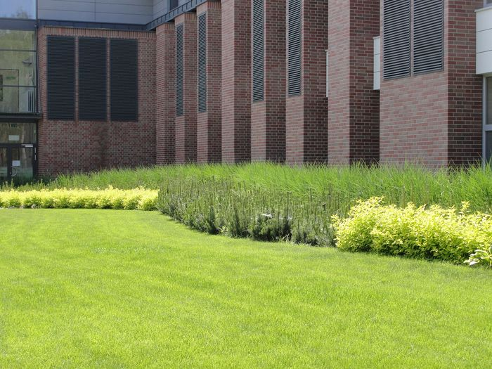 trawy2.jpg