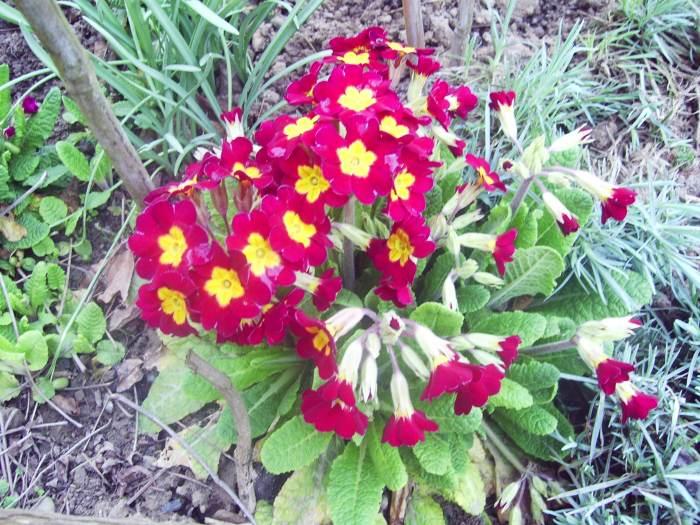 wiosna2015317.jpg