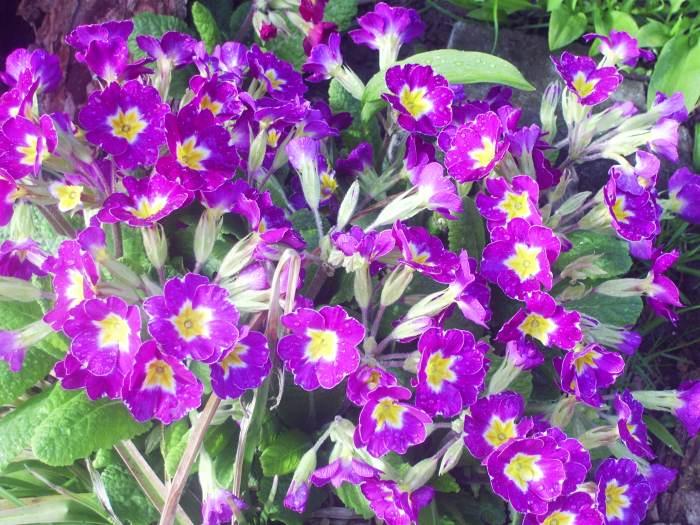 wiosna2015335.jpg