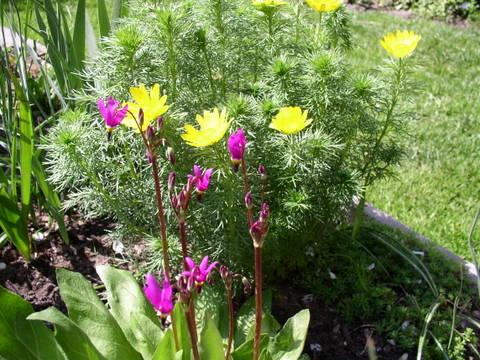 kwiaty1082.jpg