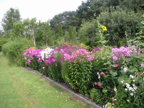 kwiaty200.jpg