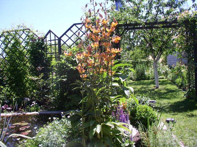 kwiaty2029.jpg