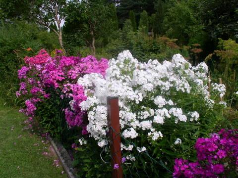 kwiaty205.jpg