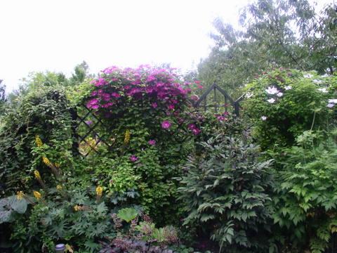 kwiaty253.jpg