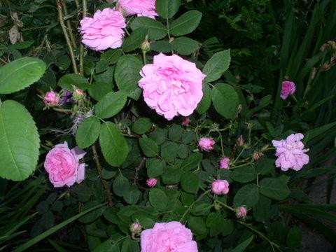 kwiaty3242-001.jpg
