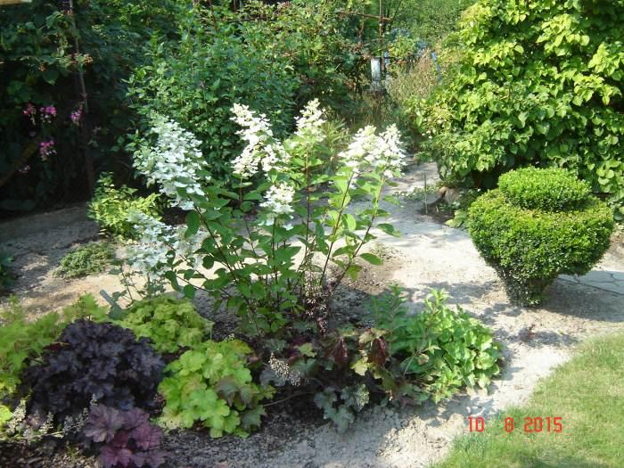 ModziutkaH.Grandifloraukorzenionaw2013rGrandiflora.jpg