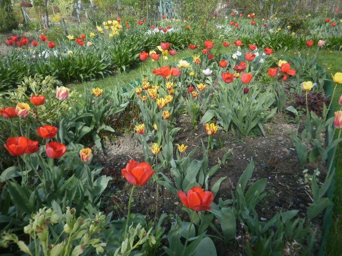 Wiosna2018r004-2.jpg