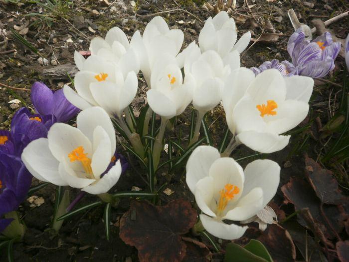 Wiosna2018r004.jpg