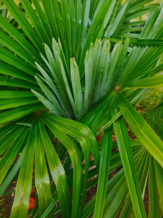 Palmyiinneegzotyki26-02-2020r008.jpg