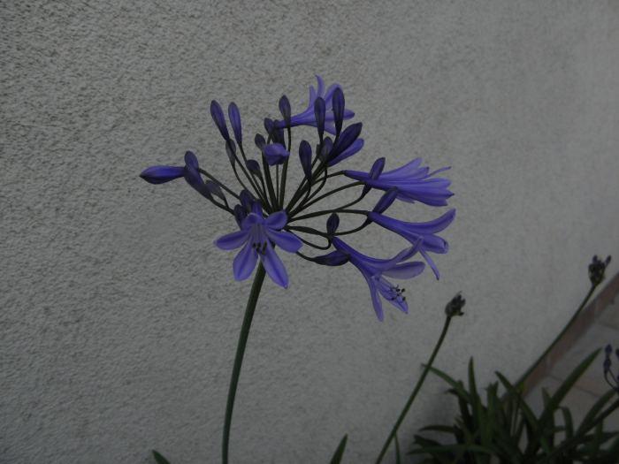 002-53.jpg