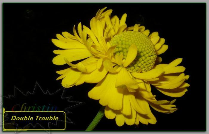 DoubleTroubledzielanogrodowynoc01-08-18Oa.jpg