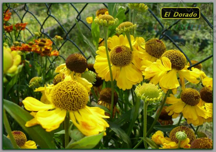 ElDoradodzielanoduychkwiatach01-08-18OA-2.jpg