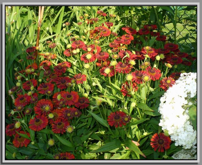 Siestadzielanniski26-07-16kwiatyKKZ.jpg