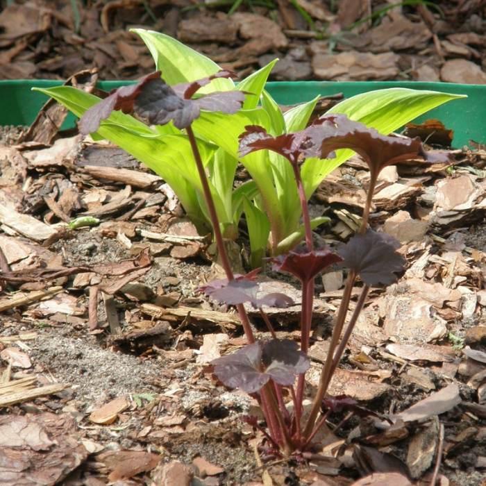 P4231215-crop-2.jpg