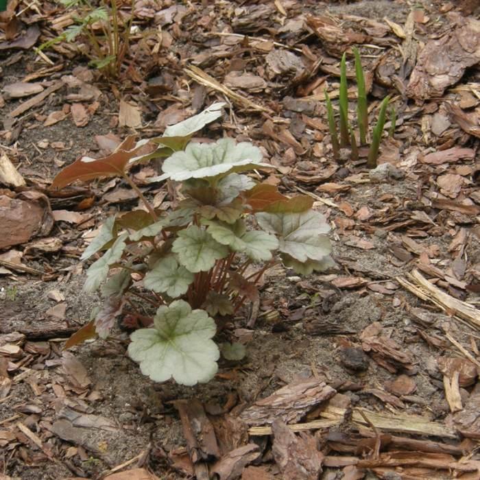 P4231226-crop-2.jpg