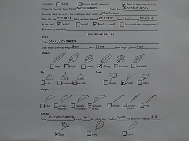 003-6.jpg