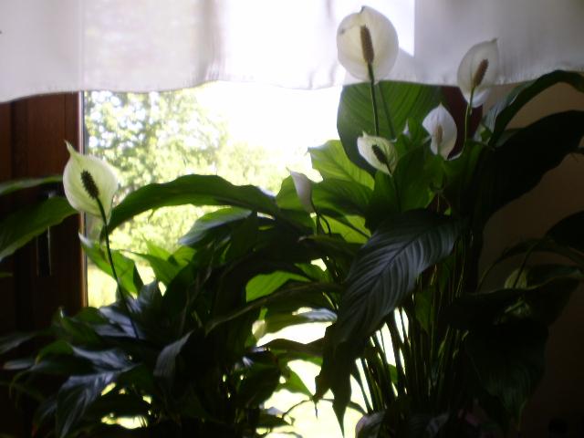 Kwiaty6.jpg