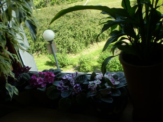 Kwiaty8.jpg