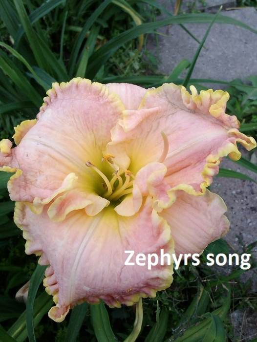 Zephyrssong2.jpg