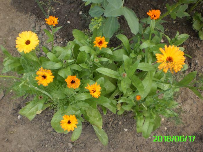 PICT0004-11.jpg