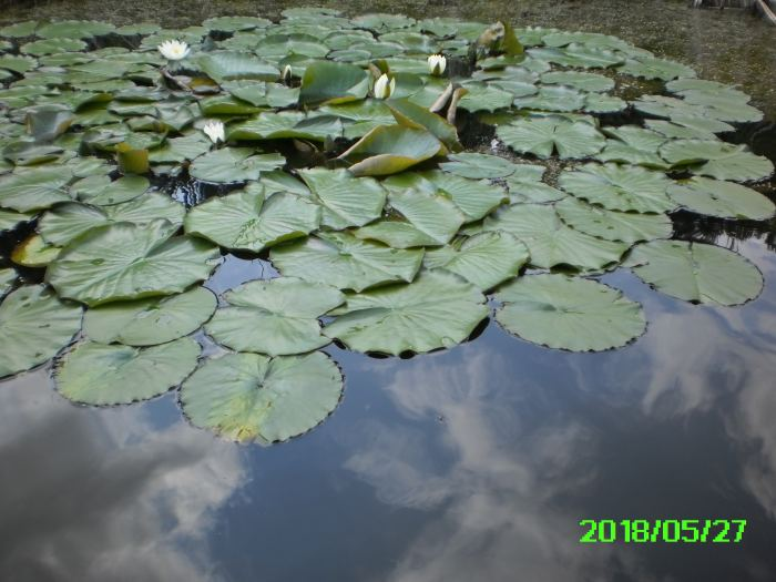 PICT0005-8.jpg