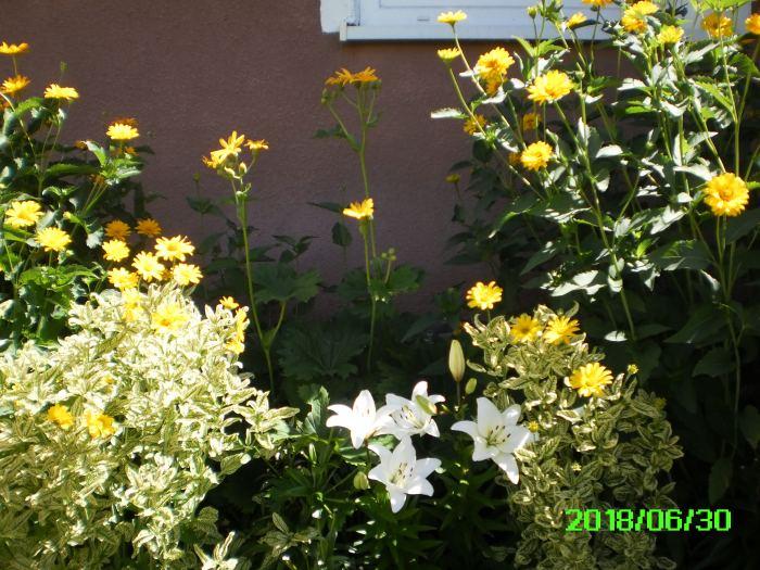 PICT0015-7.jpg