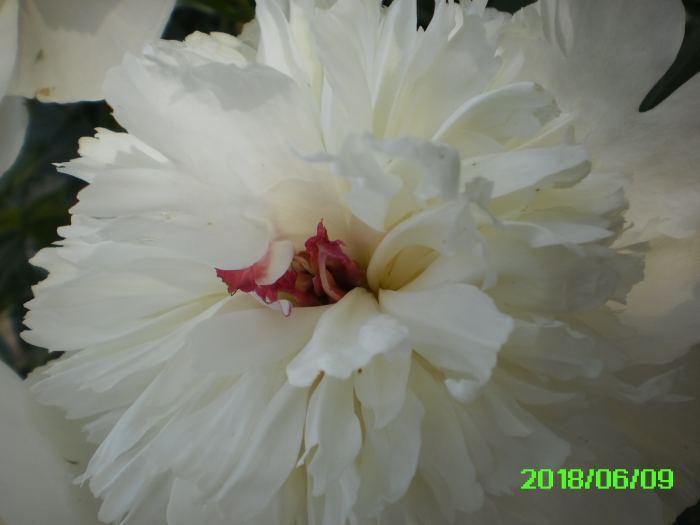 PICT0024-4.jpg