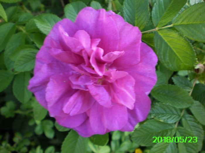 PICT0034-2.jpg
