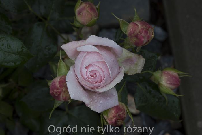 20120613-untitled-011.jpg