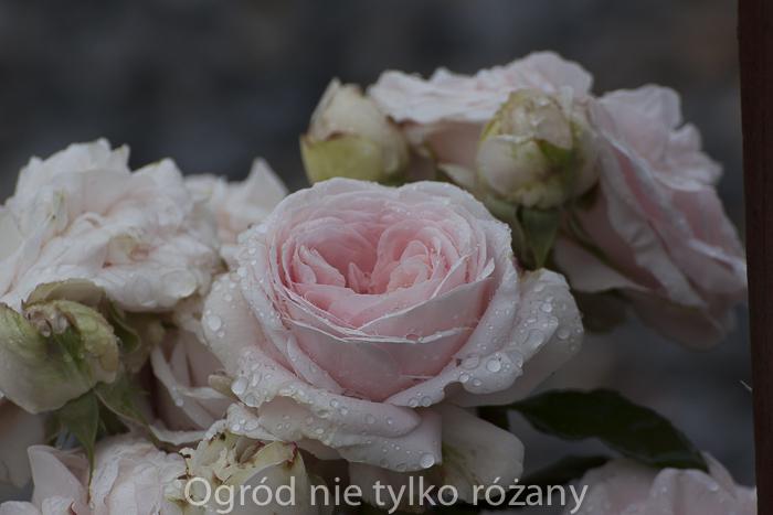 20120625-untitled-032.jpg
