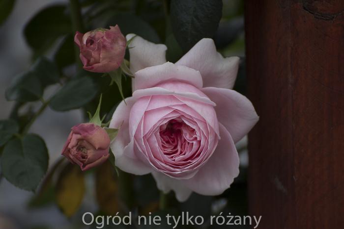 20120905-untitled-069.jpg