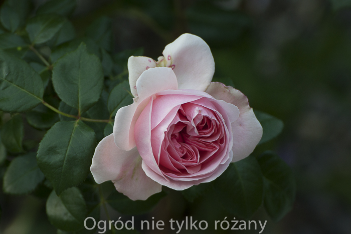 20140606-untitled-001.jpg