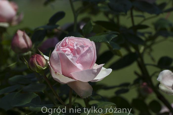 20140607-untitled-071-2.jpg
