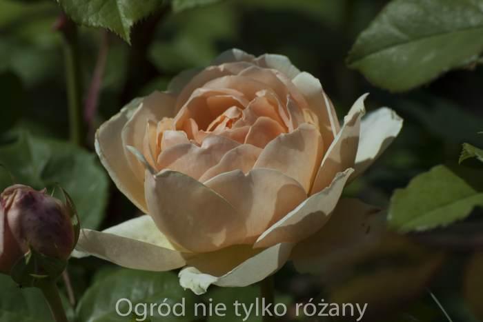 20140608-untitled-031_2014-11-30-2.jpg