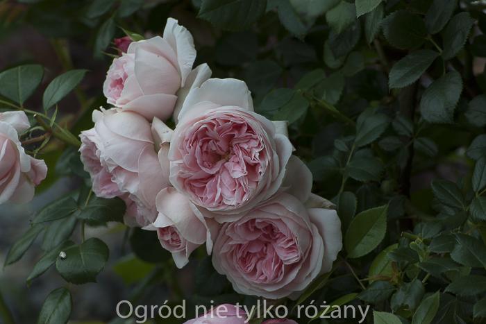 20140620-untitled-009.jpg