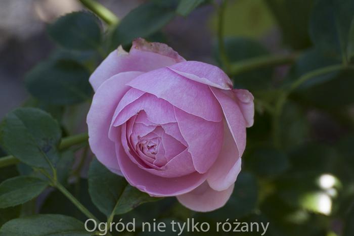 20140928-untitled-012.jpg