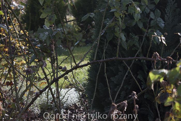 20141103-untitled-017.jpg
