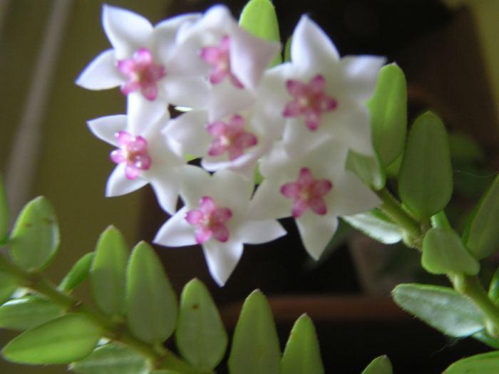 h.weebellakwiaty-2.jpg
