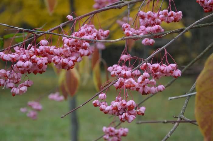 ArboretumwRogowie_12.10.2013141.JPG