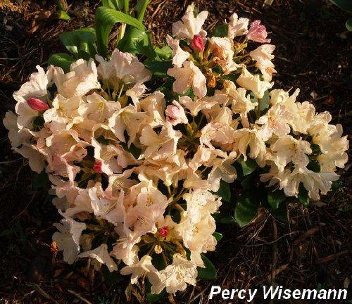 456f2995eca35a75med_2012-03-13.jpg