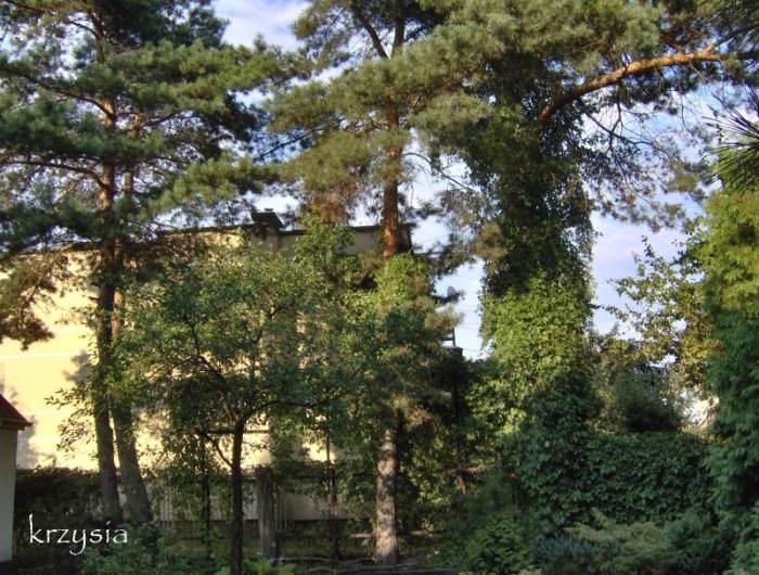 Czwschodnia-2014.jpg