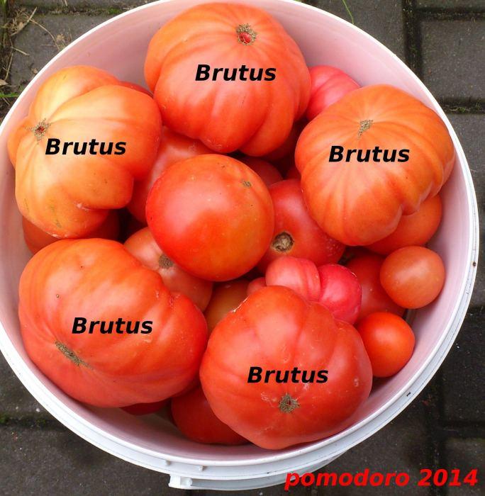 brutus-3.jpg