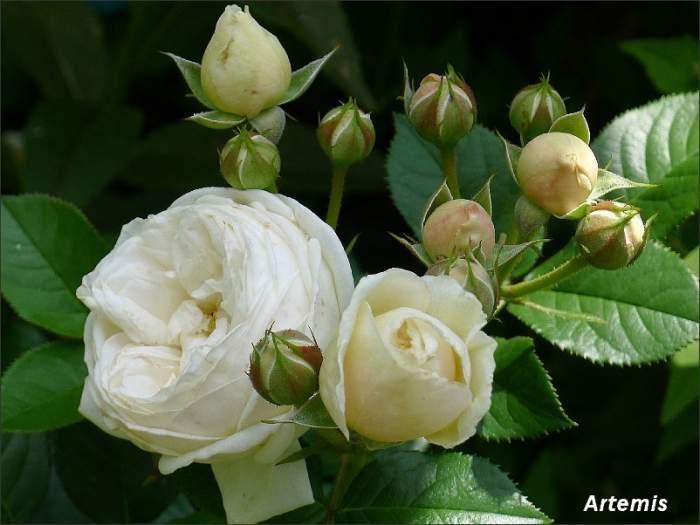 P1000543_2012-11-09.jpg